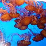 Jellyfish Exhibit