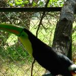 Beautiful Tucan