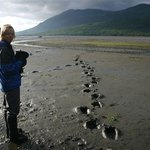 Walking softly through Kodiak bear country