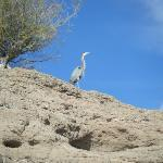 Egret on top of a cliff