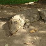 Crocodile Pool