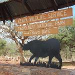 elephants at tsavo west