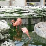 flamingos in the pond by the theatre