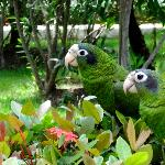 love birds on a hedge by the walkway