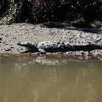 One of the many large crocodiles we saw