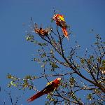 Very pleased to see these scarlet macaws