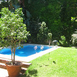 Our garden and pool
