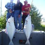 Halibut catch out of Anchor Point