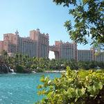 Bilde fra The Royal at Atlantis