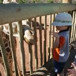 Riley feeding a giraffe.