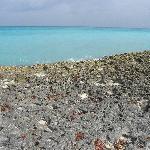 banc de corail