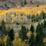 A stand of Aspens on the Idaho and Wyoming Border