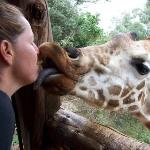 African Fund for Endangered Wildlife (Kenya) Ltd. - Giraffe Centre Aufnahme