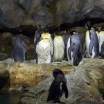Penguins - Jurong Bird Park, Singapore