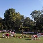 The Breakfast Lawn