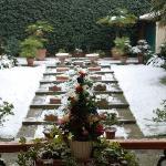 Garden with snow