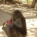 Spider monkey outside cenotes