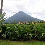 View of Arenal Volcano from our room - all rooms have same view.
