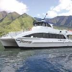 Cruise on eco-friendly, ultra-smooth catamarans.