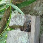 Lizard in gatepost of Oasis