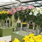 The cut flower show