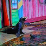 Bilde fra Kansas City Zoo