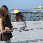 Princess Autumn and her friend Pelican of Ft. Myers Pier.