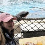 Breakfast with Shamu at Seaworld, Sandiego, California
