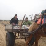 A jaunt on a camel cart.