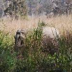 ...and Elephants visits too...!!