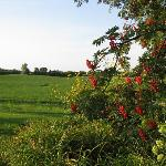 Enchanting, Pastoral vista