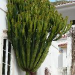 wicked cactus