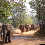 at the elephant orphanage