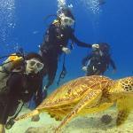 We were swimming w/ a sea turtle!