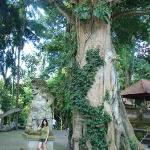 The tree must have live for hundred years. You just cannot NOT feel humble before nature force l