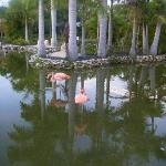 Flamingo's in the Hotel Grounds