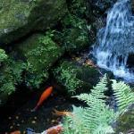 Fish and waterfall