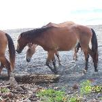 The wild horses that roam the beaches right outside the bungalow.