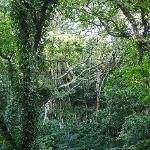 ガジュマルの森