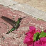 Even the humming birds avoided resort food
