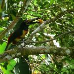 Toucan (Collard Aracri) from dinning area
