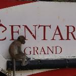 Monkeys on hotel beach!