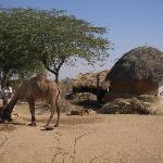 Local dung-hut village (on tour)