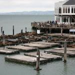 the Pier 39 Sea Lions... but you'll see more of them later