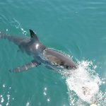 White Shark Diving Company Image