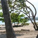 Palmen en de zee