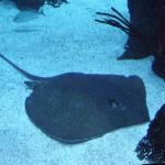 Bilde fra Aquarium Restaurant
