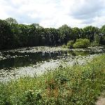 Lake outside Colwick Hall