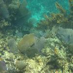 Breathtaking reef