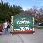 Bilde fra Disney's Animal Kingdom